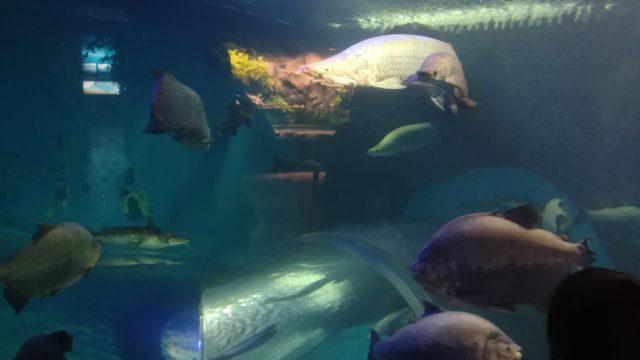 須磨水族館のバリアフリー